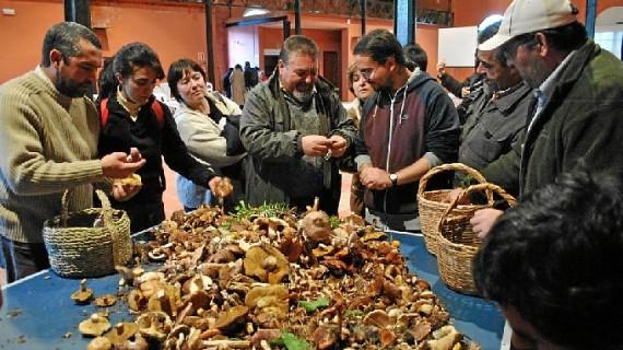La V edición de las Jornadas Micológicas de Zalamea se celebra este fin de semana