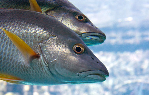 La acuicultura onubense incrementó su facturación un 11,5% en 2014 con una producción que rozó el millar de toneladas