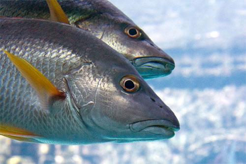 Cursos de acuicultura. / Foto: sferaproyectoambiental.wordpress.com.