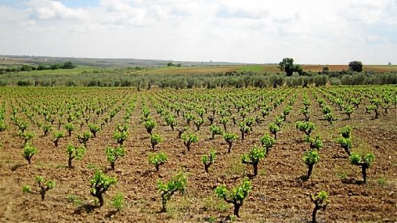 Convocatoria para solicitar ayudas a la promoción del vino en mercados de terceros países