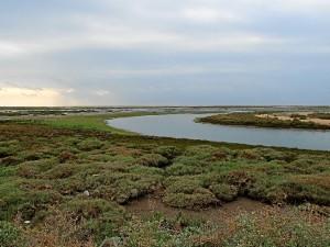 Dúnala nació en la isla Saltés, en plena Ría de Huelva. / Foto: imagina65.blospot.com.