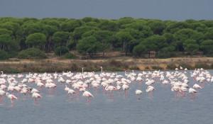 Saltés está enclavada en el Paraje Natural Marismas del Odiel, declarado Reserva de la Biosfera.