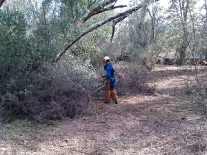 Trabajos forestales llevados a cabo en la Sierra.