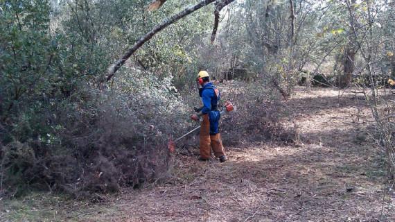 El programa de mejora forestal y regeneración medioambiental y rural ha generado ya en Huelva más de 40.000 jornales