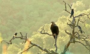 El Huelva se han podido captar imágenes de diversas aves.