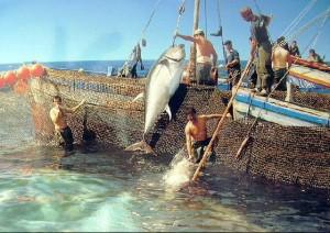 La vida de Huelva permanece unida histórica a la pesca.
