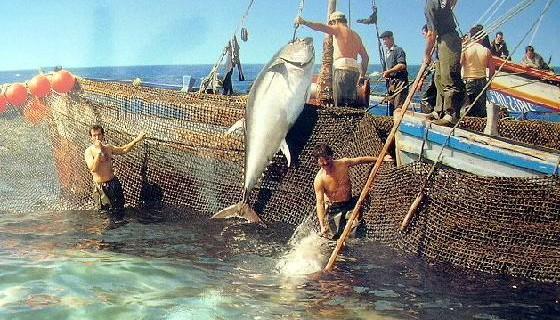 El resurgir del olvidado patrimonio pesquero de la Costa de Huelva