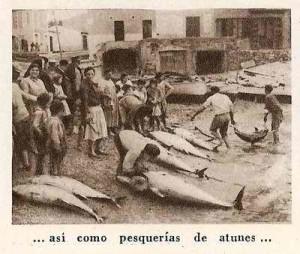 Venta de atún en el Mercado del Carmen. / Foto: tonyines.