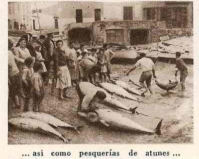Isla Cristina, origen y punto de expansión de las almadrabas de atún onubenses