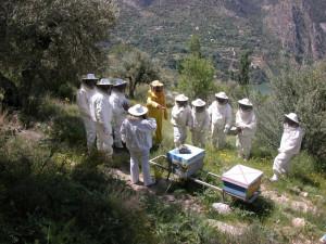 Einstein decía que sin abejas la humanidad sólo duraría cuatro años.