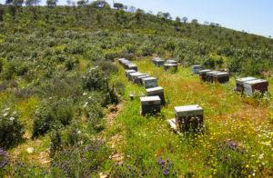 La miel ecológica onubense es de máxima calidad.