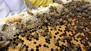 Un panel de abejas.