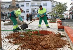 Los operarios reponiendo árboles.
