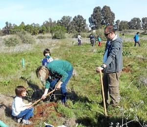 La actividad ha consistido en plantar un árbol.