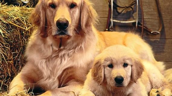 Recogida de pienso para perros y gatos a favor de un centenar de protectoras