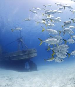 La riqueza de los fondos marinos es incalculable.