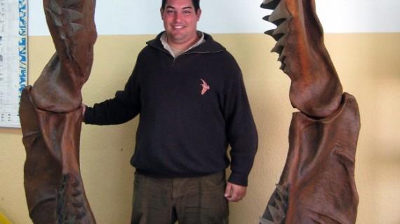 El tiburón más grande del mundo habitó en tierras onubenses, según demuestra el hallazgo de unos fósiles en Beas