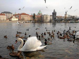Una bella imagen de Praga, otra de las ciudades en las que ha estado.