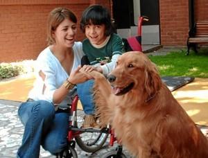 Los perros reciben un adiestramiento específico. / Foto: todossomosuno.com.mx