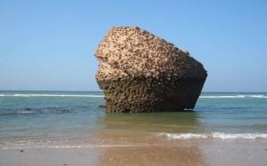 La playa de Matalascañas ofrece accesibilidad total a los bañistas y una amplia programación de ocio estival
