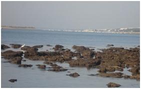 Intermareal rocoso, Playa de El Portil (Huelva).