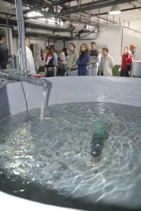 La acuicultura en el Ifapa.