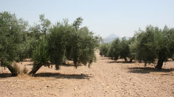 Más de 8.000 agricultores onubenses se beneficiarán del pago de las ayudas directas de la PAC