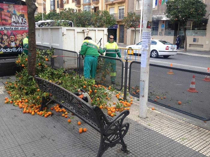 Los operarios proceden a podar los naranjos de la capital.