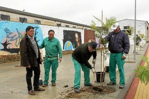 Operarios plantan árboles en diversos puntos de Bollullos.