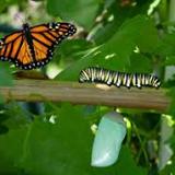 'De oruga a mariposa' pretende conseguir una transformación en la conducta de los afectados por TDAH.