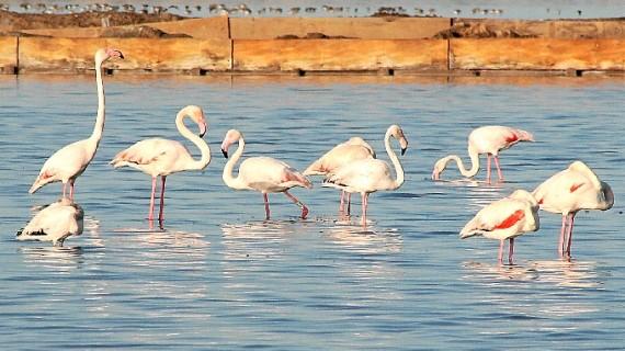 Marismas del Odiel, un paraíso natural para los amantes de las aves y la naturaleza