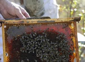 Ayudas a la apicultura.