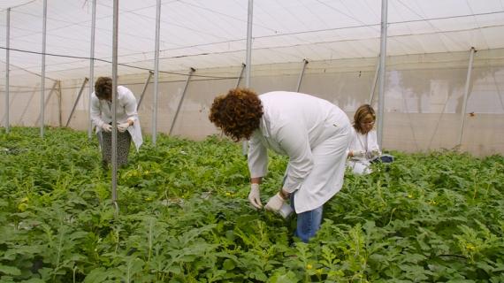 El Ifapa convoca plazas para titulados superiores en el sector agroalimentario
