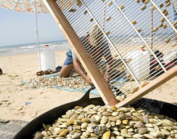 Abierta al marisqueo la zona de producción del espacio marítimo de Doñana
