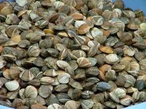 Cada día se subastan en Isla Cristina unos 15.000 kilos de chirlas. / Foto: Lonja de Isla Cristina.