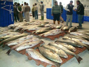 La gestión se realiza de forma conjunta entre la cofradía de pescadores y los armadores de buques de pesca. / Foto: Lonja de Isla Cristina.