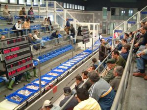 Isla también fue pionera en la forma de venta directa de pescado. / Foto: Lonja de Isla.