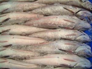 Ya en el año 2000 se convirtió en la lonja que más pesca comercializaba en Andalucía. / Foto: Lonja de Isla Critina.