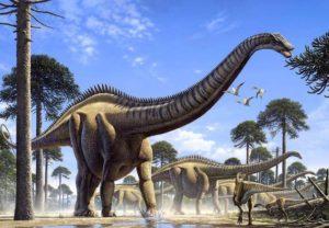 Por el momento no se han hallado restos fósiles en Huelva, aunque no se puede descartar que lo haga en el futuro.