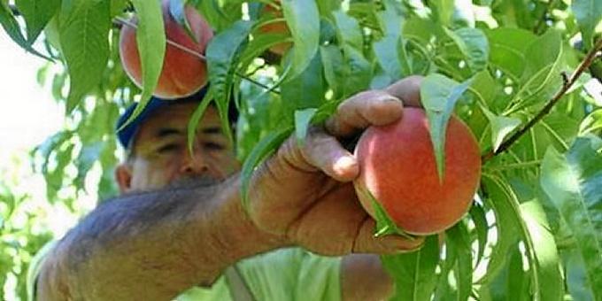 Las exportaciones de fruta fresca fueron las más destacadas.