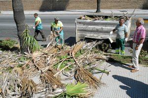 Poda de palmeras 'washingtonias' en Cartaya.