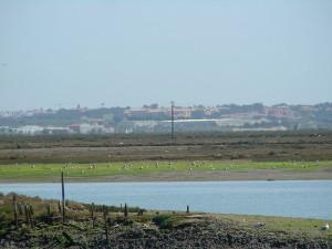 Paraje Natural de Marismas de Isla Cristina, en el entorno del hallazgo.