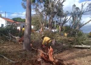 El Infoca trabaja en las labores de limpieza de árboles. /Foto: @PlanInfoca