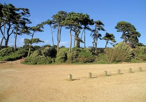Los pinos característicos de Huelva se encuentran en Lepe beach / Foto: © Pierre Terre and licensed for reuse under this Creative Commons Licence