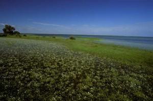 Una de las bellas imágenes de Doñana mostradas en la película.