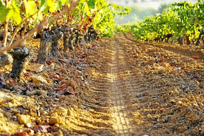 Los populares reclaman a la institución provincial que incorpore en los presupuestos una partida para la certificación de la Ruta del Vino Condado de Huelva.