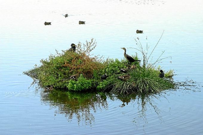 Algunas de las isletas artificiales instaladas en la Laguna de Palos.