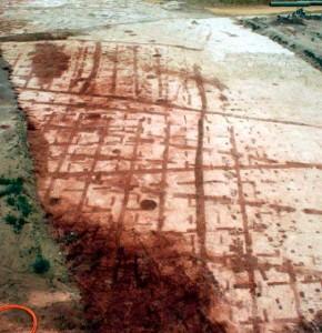 El yacimiento del Seminario aporta las características de la vid protohistórica, unas señales que dieron lugar a varias leyendas urbanas. / Foto: Alexia Echevarría.