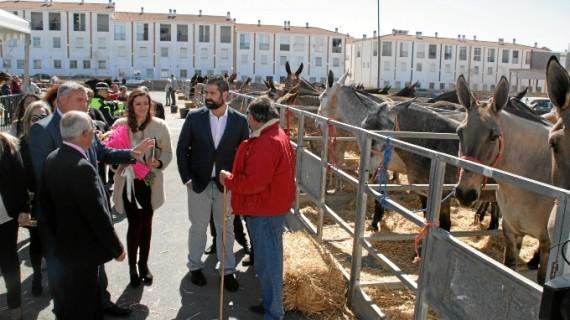 Arranca la XIV Feria del Caballo de Cartaya, con una amplia zona ganadera, exhibiciones ecuestres y desfiles