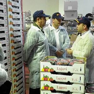 Visita a la empresa de berries 'Lujovi'.
